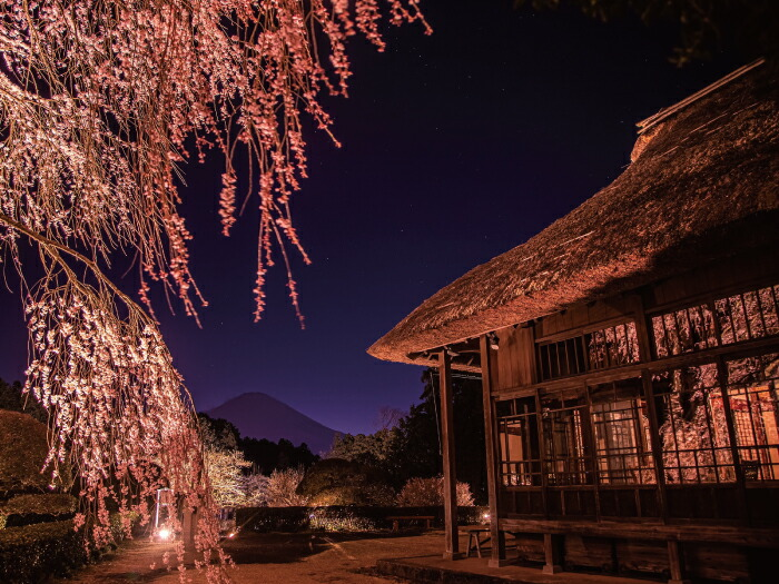 母屋からの富士山と夜桜