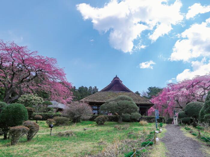 秩父宮両殿下が愛した茅葺屋根の母屋を修復し、伝統文化の継承と良好な景観創出を図りたい