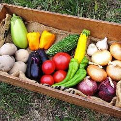 栽培期間中農薬化学肥料不使用 京都丹波産野菜セット 8回定期便
