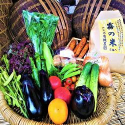 栽培期間中農薬・化学肥料不使用 旬の京野菜S&「霧の米」5kg