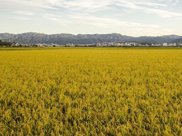 亀岡ならではの自慢の農産物をこれからも全国の皆さんにお届けします