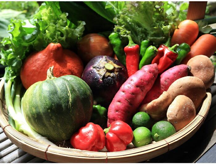 亀岡市は京野菜の一大産地として知られています