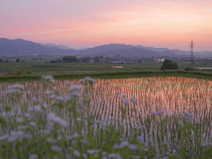 亀岡盆地の美しい夕焼け