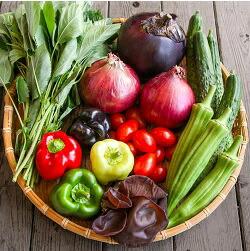 [坂ノ途中]深みのある味わい夏野菜セット定期便 2週間に1回全5回