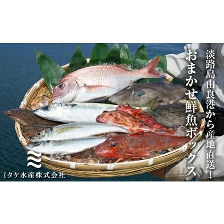兵庫県洲本市 【ふるさと納税】EW02*淡路島由良港から産地直送!おまかせ鮮魚ボックスB