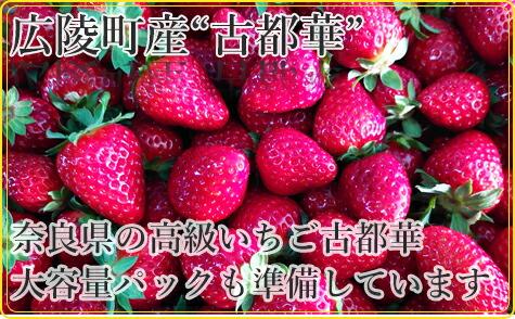 ふるさと納税 イチゴ いちご