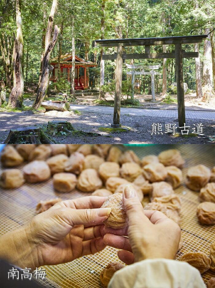 熊野古道と南高梅