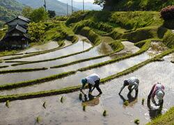 5 農林水産業等の地域産業の振興