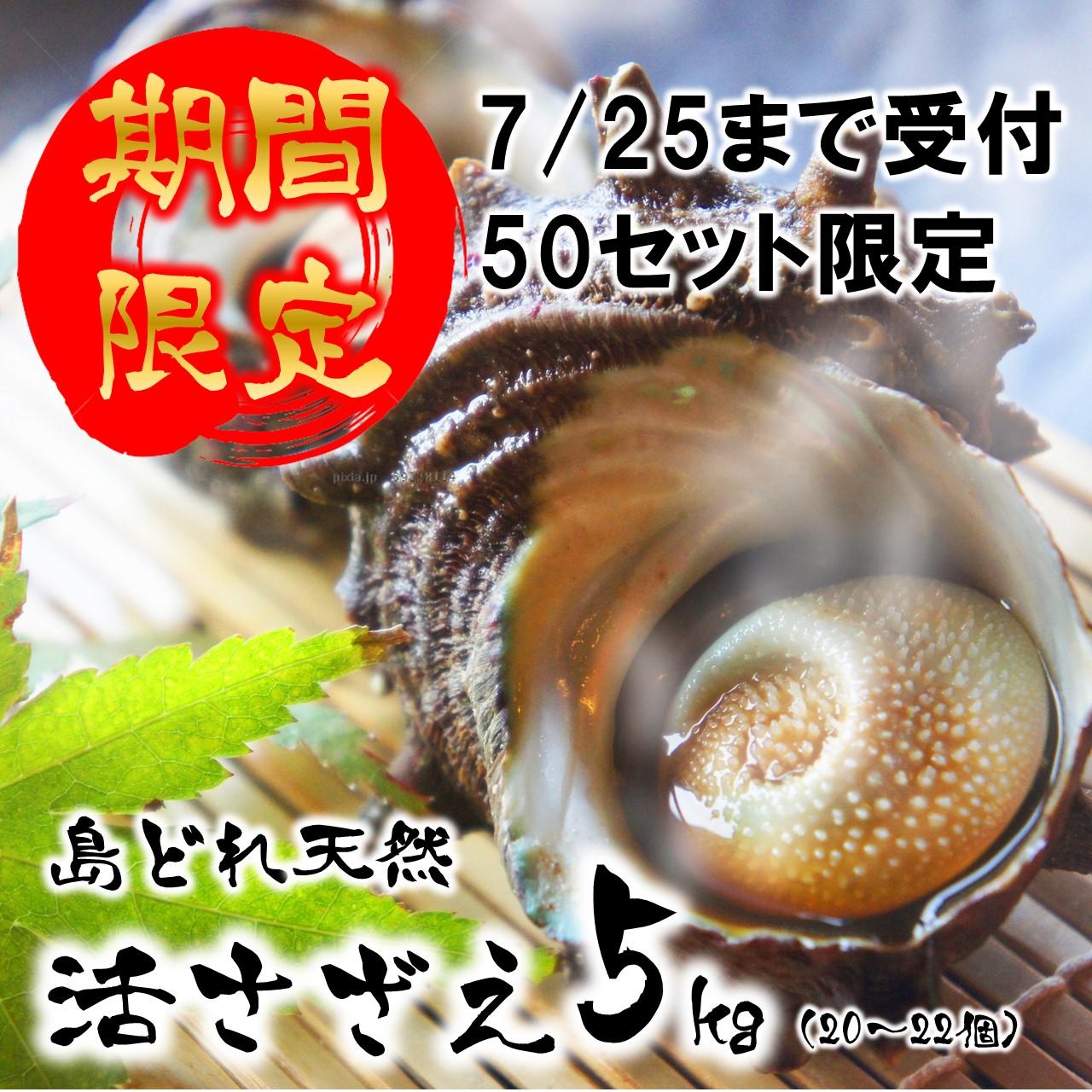島根県海士町 【ふるさと納税】期間限定 数量限定 活さざえ 5kg 先行発送 7月中に届く