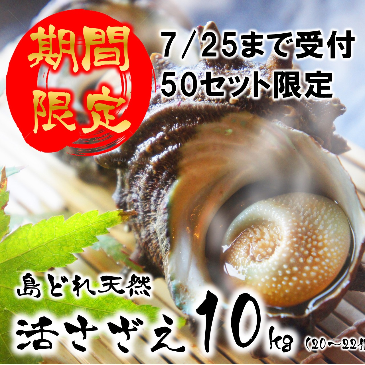 島根県海士町 【ふるさと納税】期間限定 数量限定 活さざえ 10kg 先行発送 7月中に届く