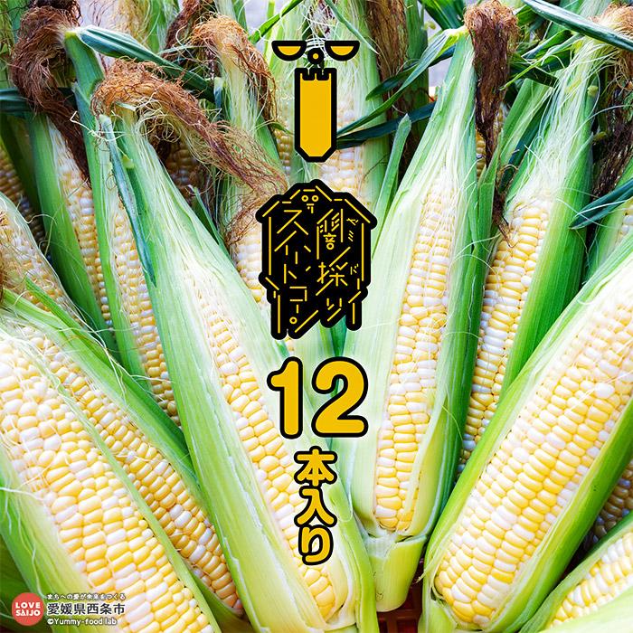 【ふるさと納税】peakfarm直送<闇採りスイートコーン12本入り>※2021年6月から7月末迄に順次出荷します。 野菜 とうもろこし 愛媛県 西条市 【冷蔵】