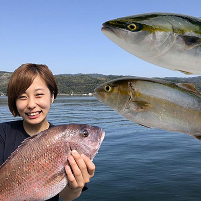 高知県須崎市 【ふるさと納税】小島水産の安心・安全・とっても新鮮なお魚 年3回Dコース