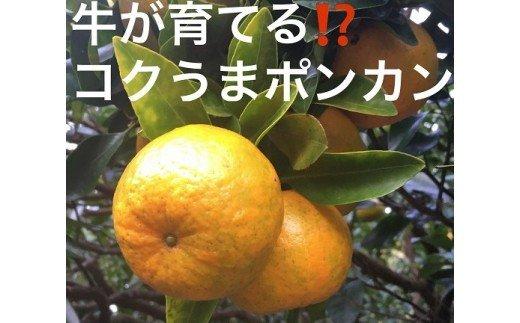 高知県東洋町 【ふるさと納税】ko7 牛が育てる!コクうまポンカン <5kg>M・L・L...
