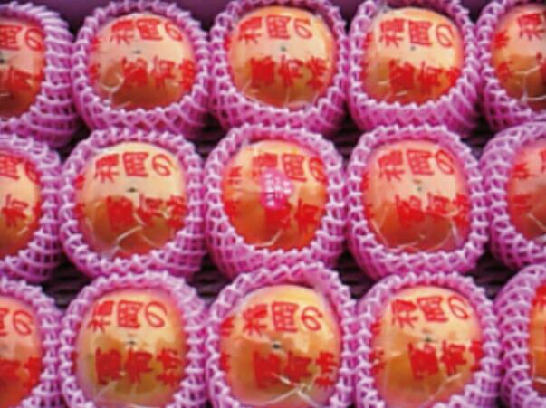 福岡県うきは市 【ふるさと納税】 日永園 冷蔵富有柿 5キロ箱