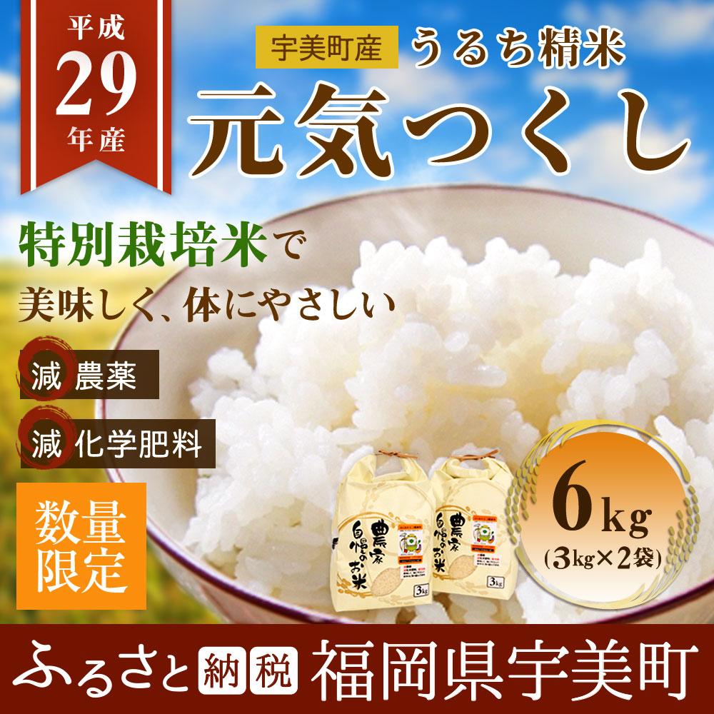 うるち精米 特別栽培米 福岡県産 元気つくし 6kg