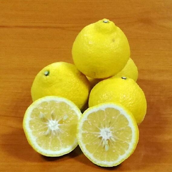 佐賀県鹿島市 【ふるさと納税】A-74 鹿島 まるな柑橘園のはるか 約4.5kg