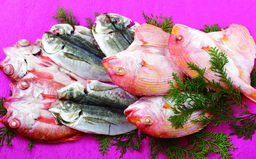 長崎県佐世保市 【ふるさと納税】のどぐろ・れんこだい・旬の魚セット