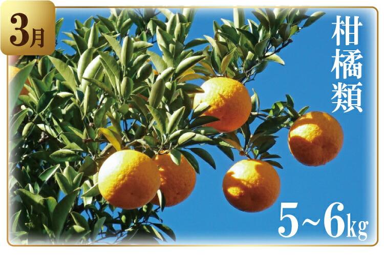 3月 柑橘類