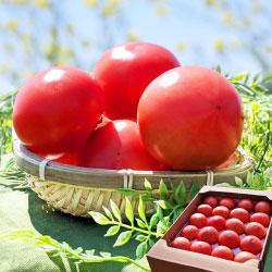 野菜ソムリエ 岡田健志郎が育てた トマト 4kg
