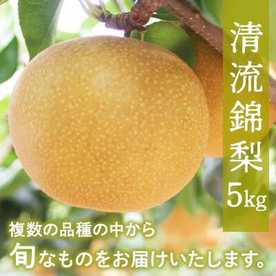 ふるさと納税 清流錦梨【5Kg】