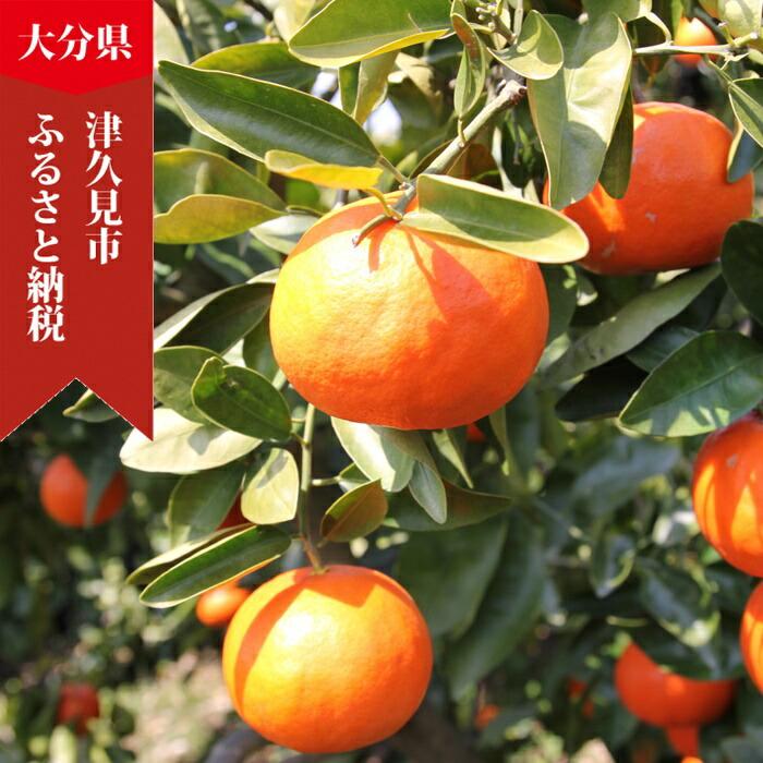 大分県津久見市 【ふるさと納税】サンクイーン