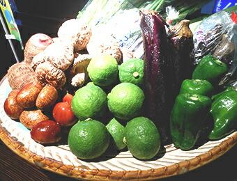 大分の野菜畑