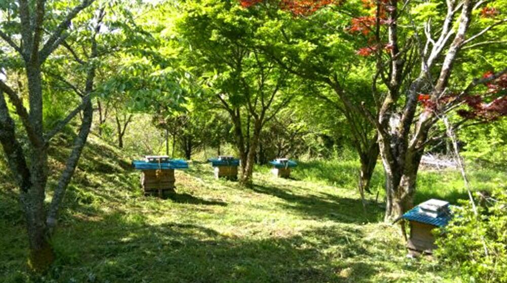 日本ミツバチの純粋蜂蜜