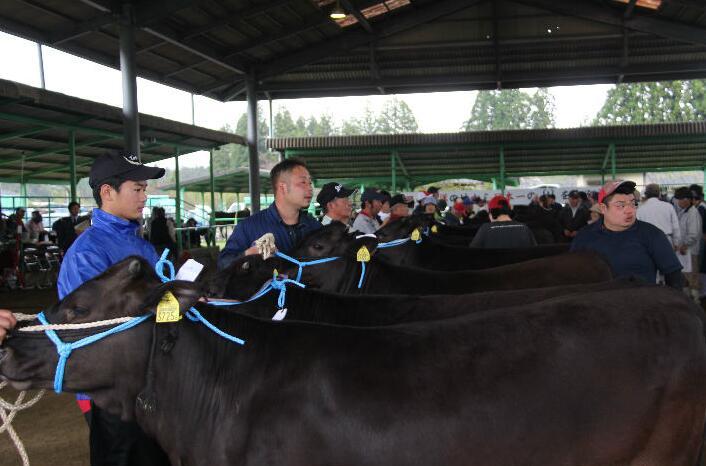 熟練の畜産農家