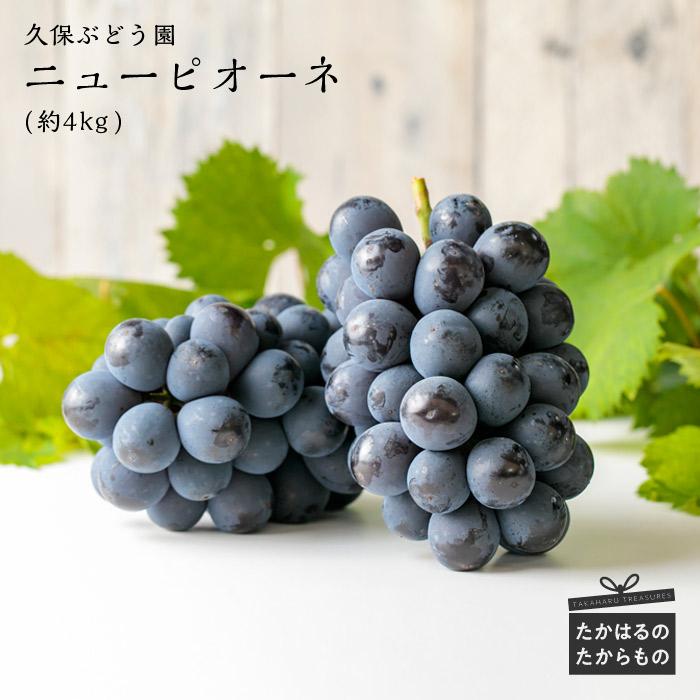 【ふるさと納税】宮崎県産特選 久保ぶどう園のニューピオーネ(約4kg)