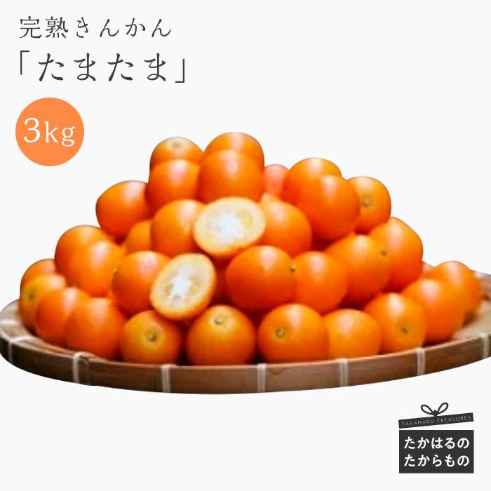 【ふるさと納税】宮崎県産 特選 完熟きんかん「たまたま」 3kg