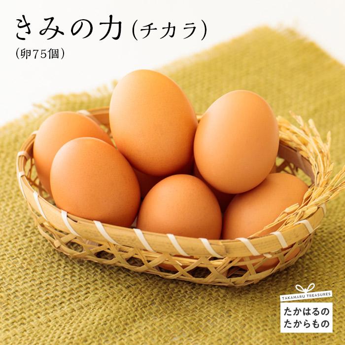【ふるさと納税】きみの力(チカラ)(卵75個)