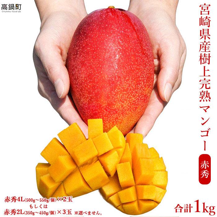 宮崎県産完熟マンゴー赤秀