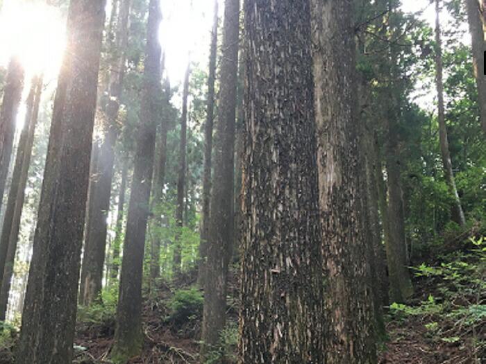 森に埋もれていた豊かな資源を活かして「香りビジネス」を生み出し、過疎の町を「香りの町」に生まれ変わらせたい!