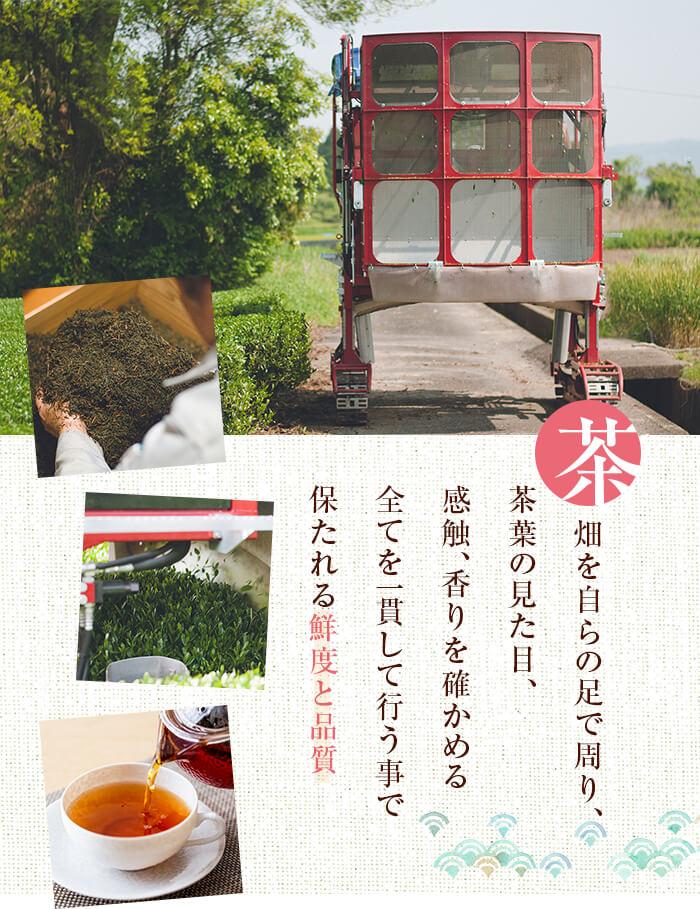 茶畑を自らの足で周り、茶葉の見た目、感触、香りを確かめる 全てを一貫して行うことで保たれる鮮度と品質