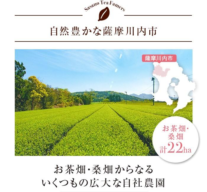 自然豊かな薩摩川内市 お茶畑・桑畑からなるいくつもの広大な自社農園