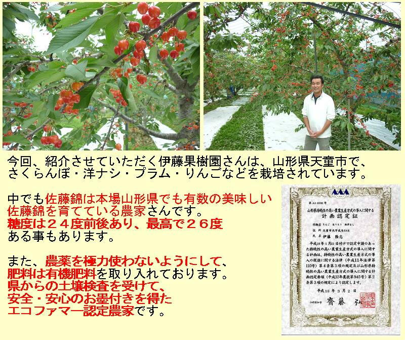 今回、紹介させていただく伊藤果樹園さんは、山形県天童市で、 さくらんぼ・洋ナシ・プラム・りんごなどを栽培されています。 中でも佐藤錦は本場山形県でも有数の美味しい 佐藤錦を育てている農家さんです。 糖度は24度前後あり、最高で26度 ある事もあります。 農薬を極力使わないようにして、 肥料は有機肥料を取り入れております。 県からの土壌検査を受けて、 安全・安心のお墨付きを得た エコファマー認定農家です。