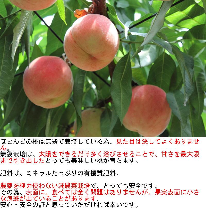 ほとんどの桃は無袋で栽培している為、見た目は決してよくありません。無袋栽培は、太陽をできるだけ多く浴びさせることで、甘さを最大限まで引き出したとっても美味しい桃が育ちます。肥料は、ミネラルたっぷりの有機質肥料。 農薬を極力使わない減農薬栽培で、とっても安全です。その為、表面に、食べては全く問題はありませんが、果実表面に小さな病班が出ていることがあります。安心・安全の証と思っていただければ幸いです。