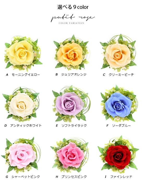 嵐カラー 花