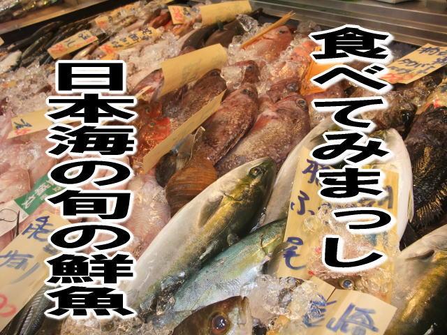 きときと北陸の鮮魚