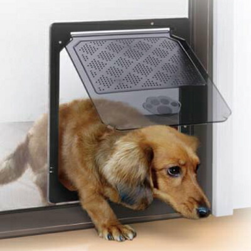 小色狗和猫交配_二极管化学屏幕的狗和猫门口 m (小狗)