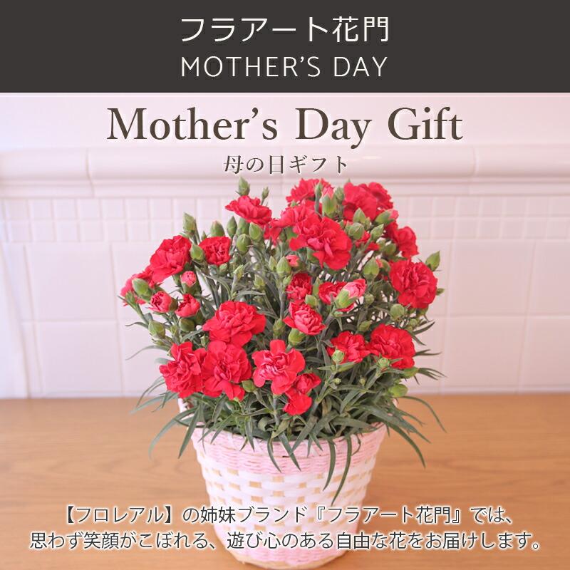 母の日、母の日カーネーション