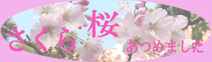 春の桜特集