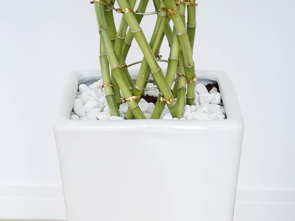観葉植物 万年竹(ミリオンバンブー) スクエア陶器鉢植え 白石の拡大