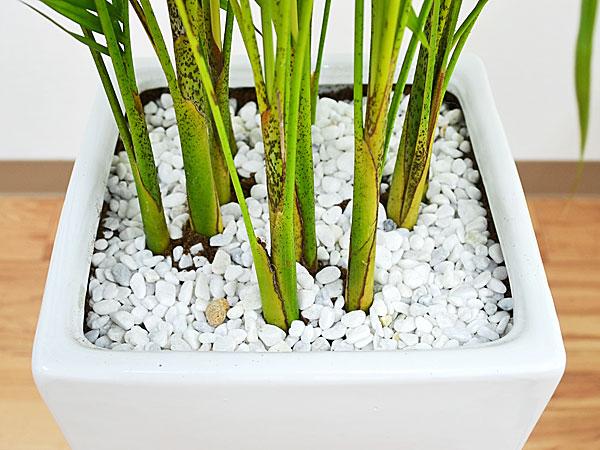 観葉植物アレカヤシ ロングスクエア陶器鉢植え 8号 白石の拡大