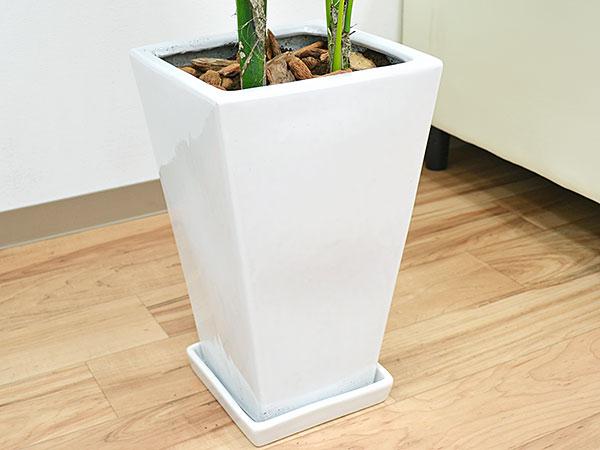 観葉植物 ケンチャヤシ スクエア陶器鉢植え 8号サイズ 陶器鉢の拡大