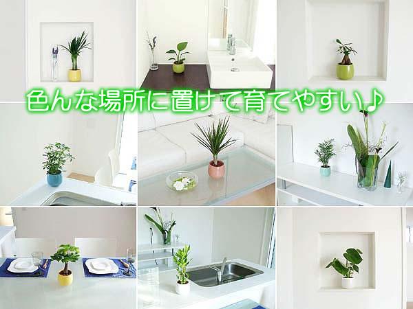 ミニ観葉植物ハイドロカルチャーイメージ