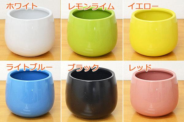 ミニ観葉植物ハイドロカルチャー陶器鉢のイメージ