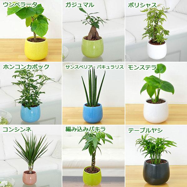 植物の種類