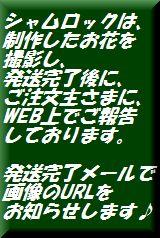 新宿四谷 花屋シャムロック 楽天市場店の写真報告