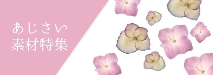 あじさい、紫陽花、アジサイ